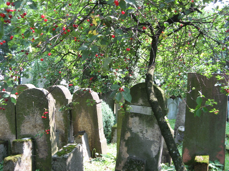 Bochnia-cemetery-10-7-11-32.JPG