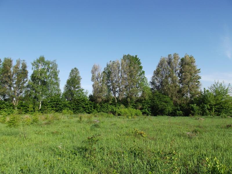 Tarnopol,Jewish-cemetery,5-2012-19.jpg
