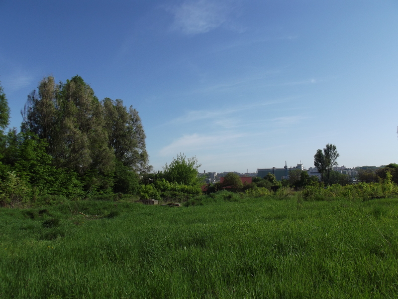 Tarnopol,Jewish-cemetery,5-2012-39.jpg