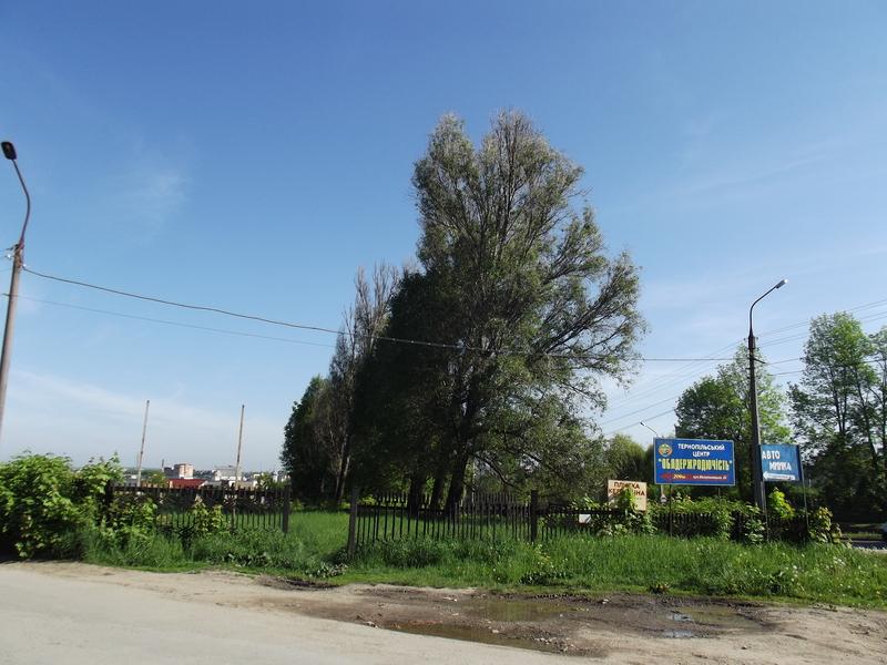 Tarnopol,Jewish-cemetery,5-2012-42.jpg